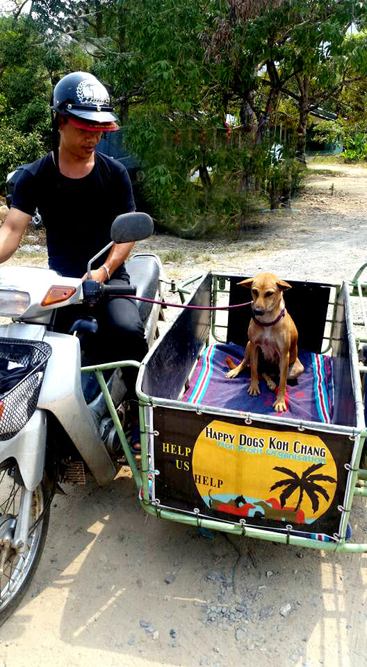 ber uns | Happy Dogs Koh Chang- animal welfare and shelter care Thailand