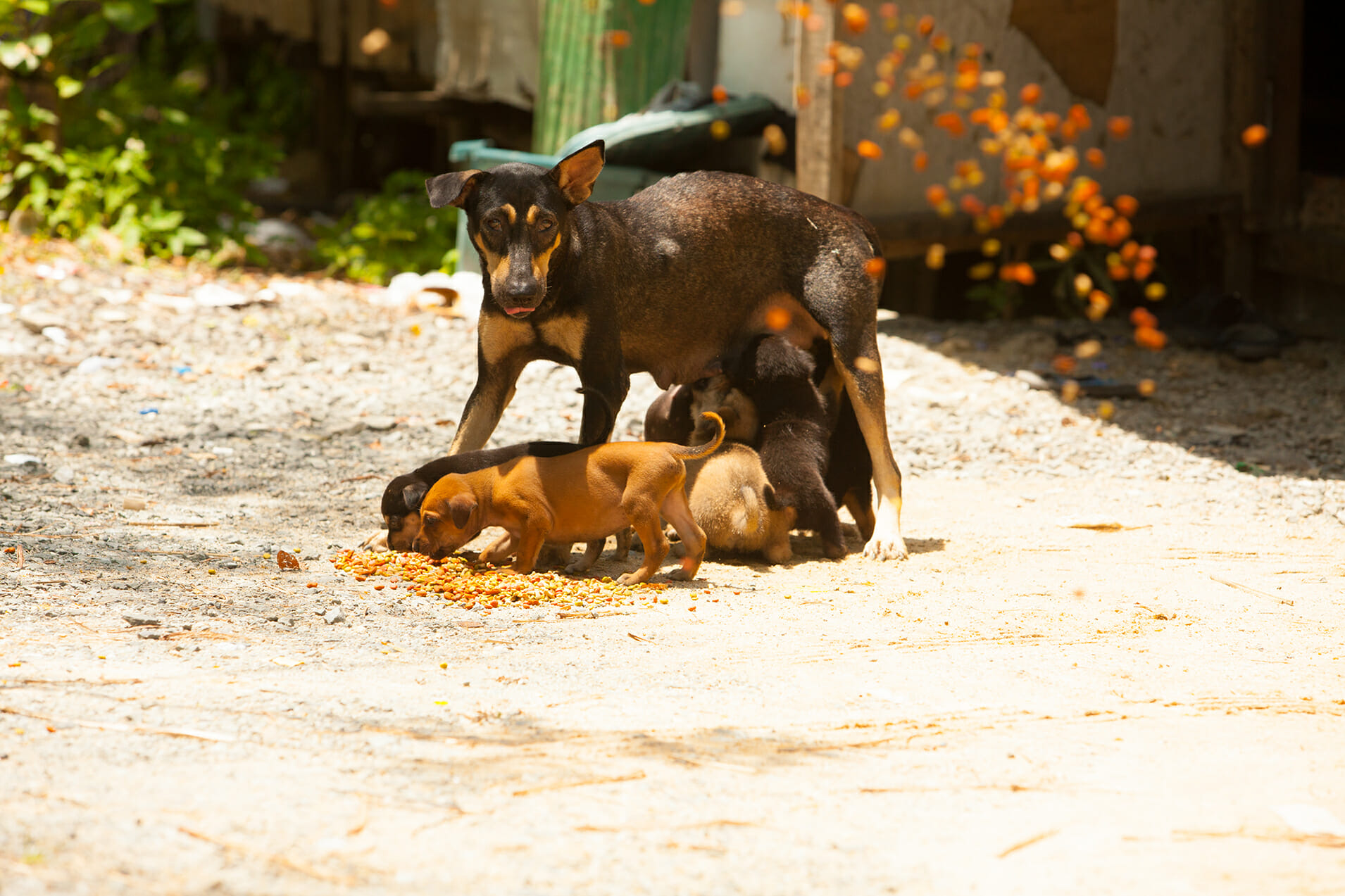 Futter 4 | Happy Dogs Koh Chang- animal welfare and shelter care Thailand