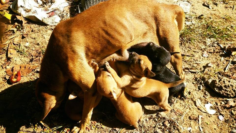 vergess welpen 17 1 | Happy Dogs Koh Chang- animal welfare and shelter care Thailand