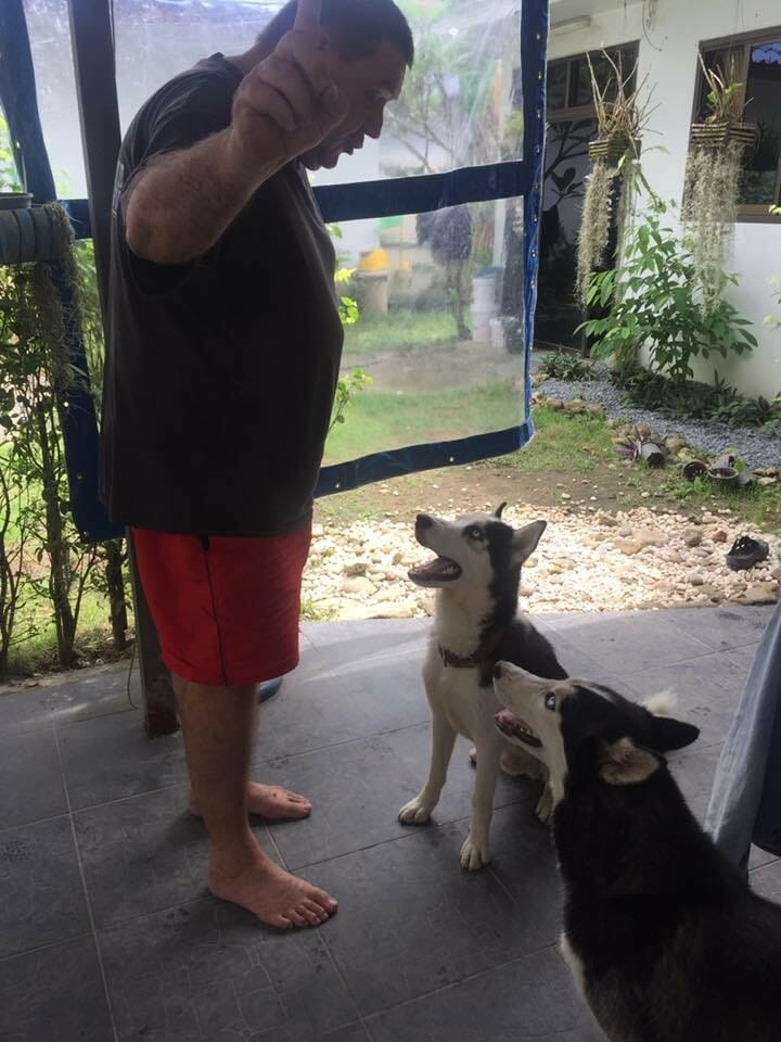 Sali mit neuem Besitzer 2 | Happy Dogs Koh Chang- animal welfare and shelter care Thailand