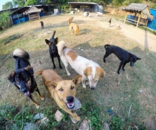 Place of Hope 22.02.2017 e1594144621381 | Happy Dogs Koh Chang- animal welfare and shelter care Thailand