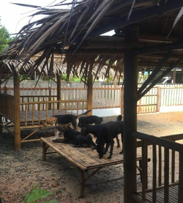 Place of hope 26.06.2016 3 e1594143730477 | Happy Dogs Koh Chang- animal welfare and shelter care Thailand