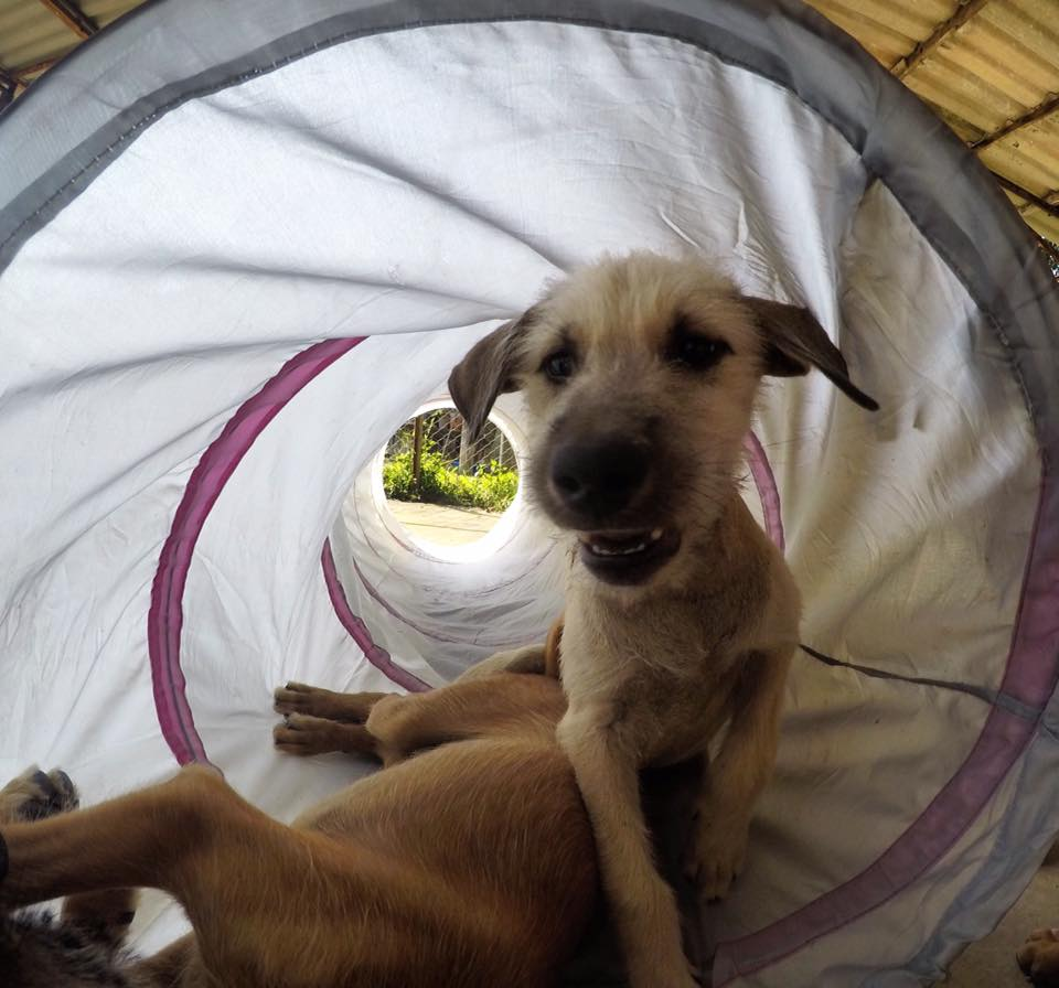 Welpen 22.02.2017 2 | Happy Dogs Koh Chang- animal welfare and shelter care Thailand