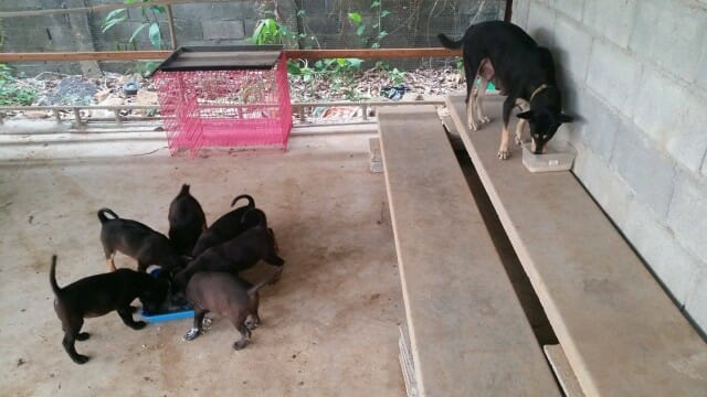 vergess place of hope fütterung Welüen und Sister e1459529623681 | Happy Dogs Koh Chang- animal welfare and shelter care Thailand