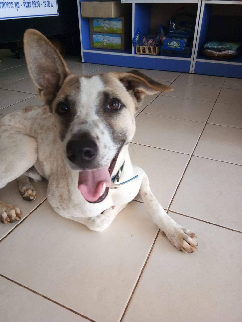 Beatles Happy Dogs Koh Chang Animal Welfare And Shelter Care Thailand