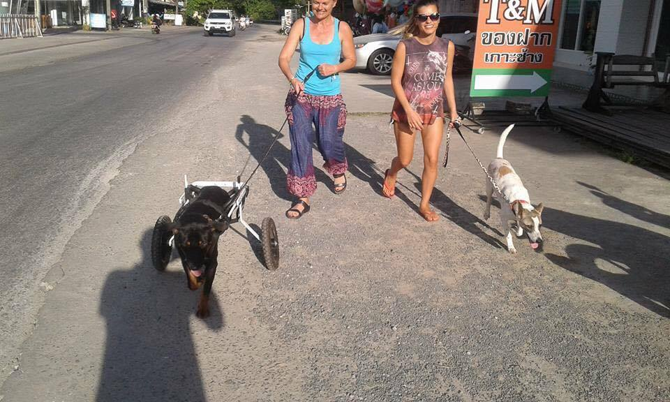 Rosco und Beatles gehen spazieren | Happy Dogs Koh Chang- animal welfare and shelter care Thailand