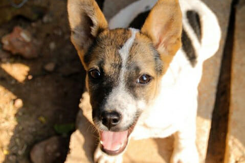 Princess Pic2 | Happy Dogs Koh Chang- animal welfare and shelter care Thailand