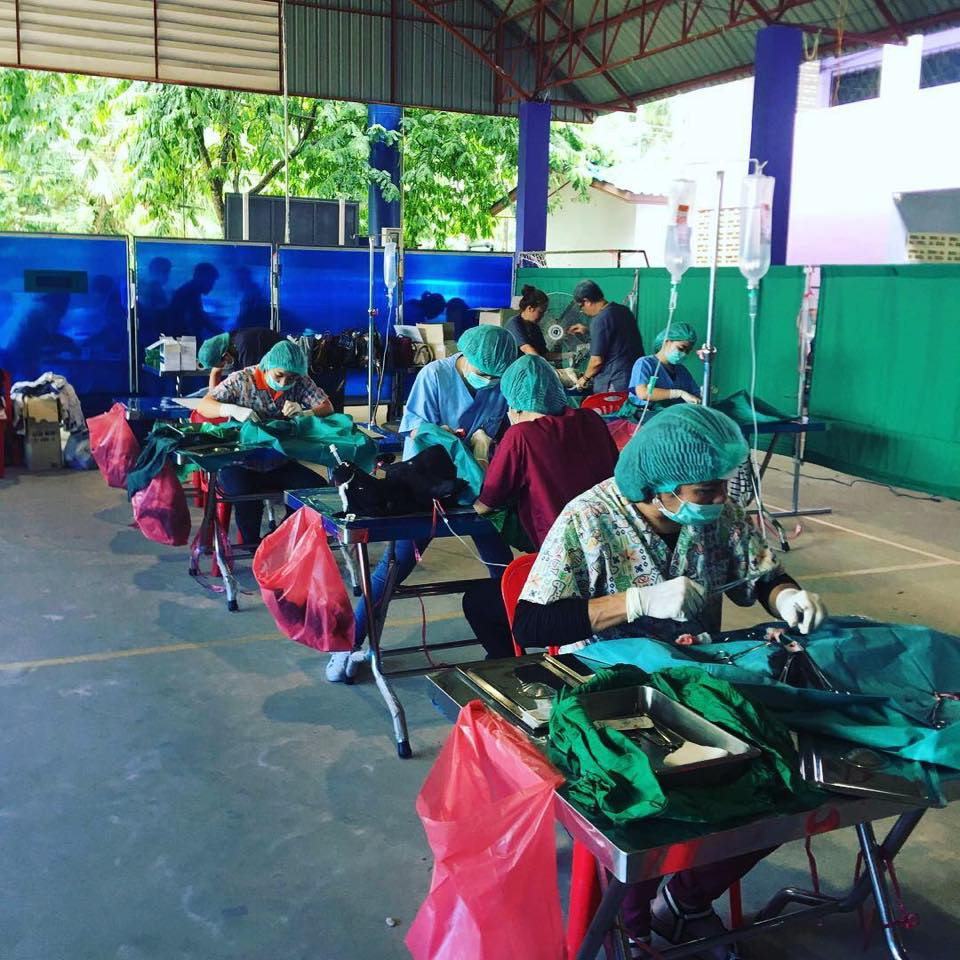 Kastrationaktion Juni 2018 | Happy Dogs Koh Chang- animal welfare and shelter care Thailand