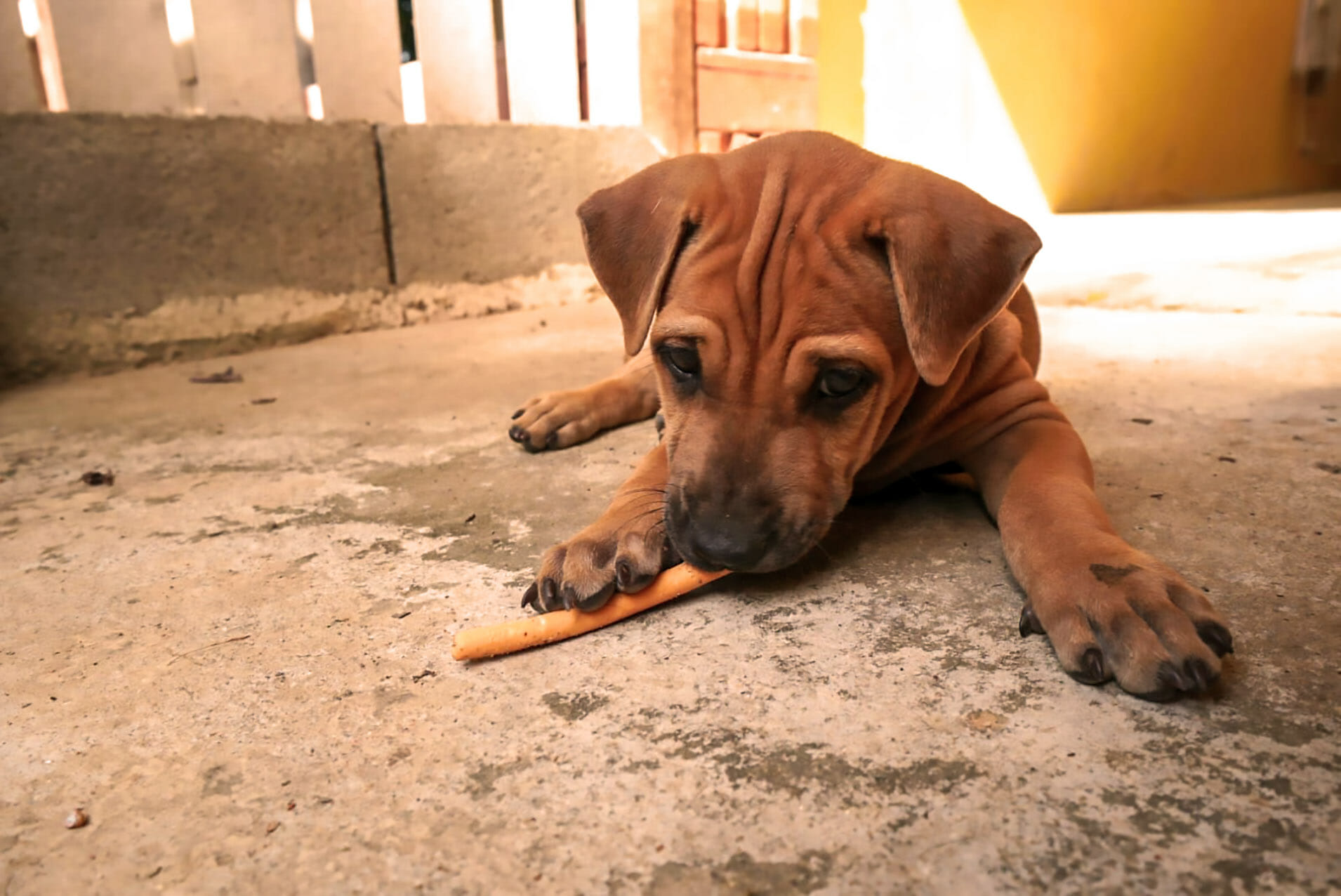 schöne Bilder Welpe | Happy Dogs Koh Chang- animal welfare and shelter care Thailand