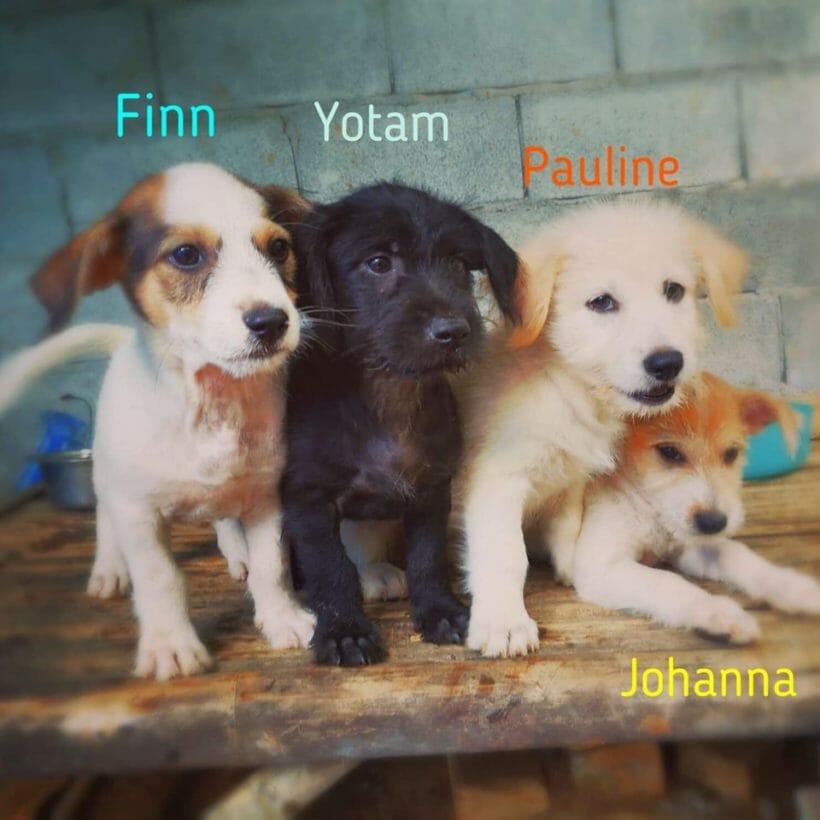Finn, Yotam, Pauline, Johanna