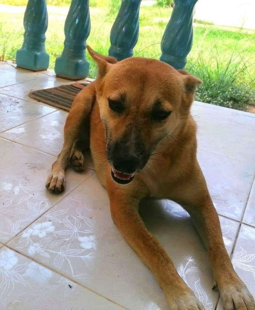 3820A39A C24E 4AD0 8F02 B31A9E26D5F5 | Happy Dogs Koh Chang- animal welfare and shelter care Thailand