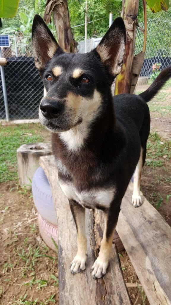 3CEB50D3 9A49 4100 8791 44118352EF16 | Happy Dogs Koh Chang- animal welfare and shelter care Thailand