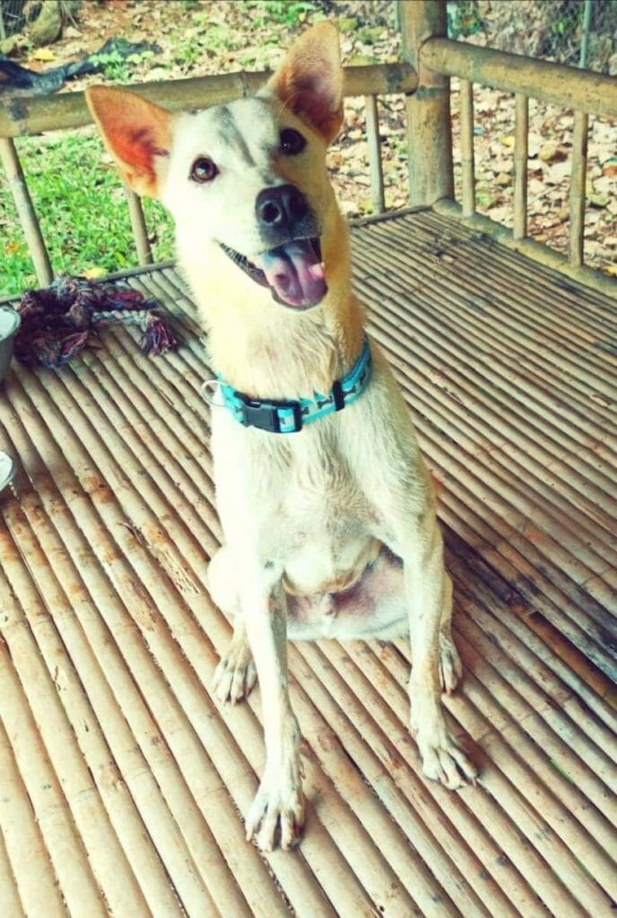 48603C43 E733 4166 AAF2 C0AB97AF0BDD | Happy Dogs Koh Chang- animal welfare and shelter care Thailand