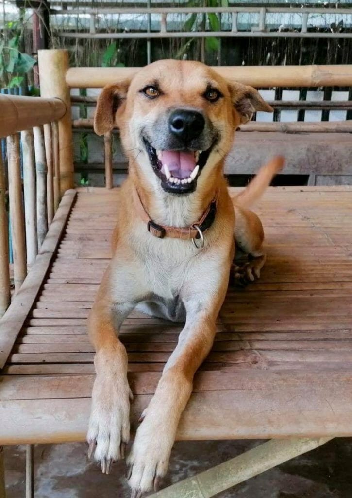 5FEAB245 A40D 443F A5F9 B77290074B2D | Happy Dogs Koh Chang- animal welfare and shelter care Thailand