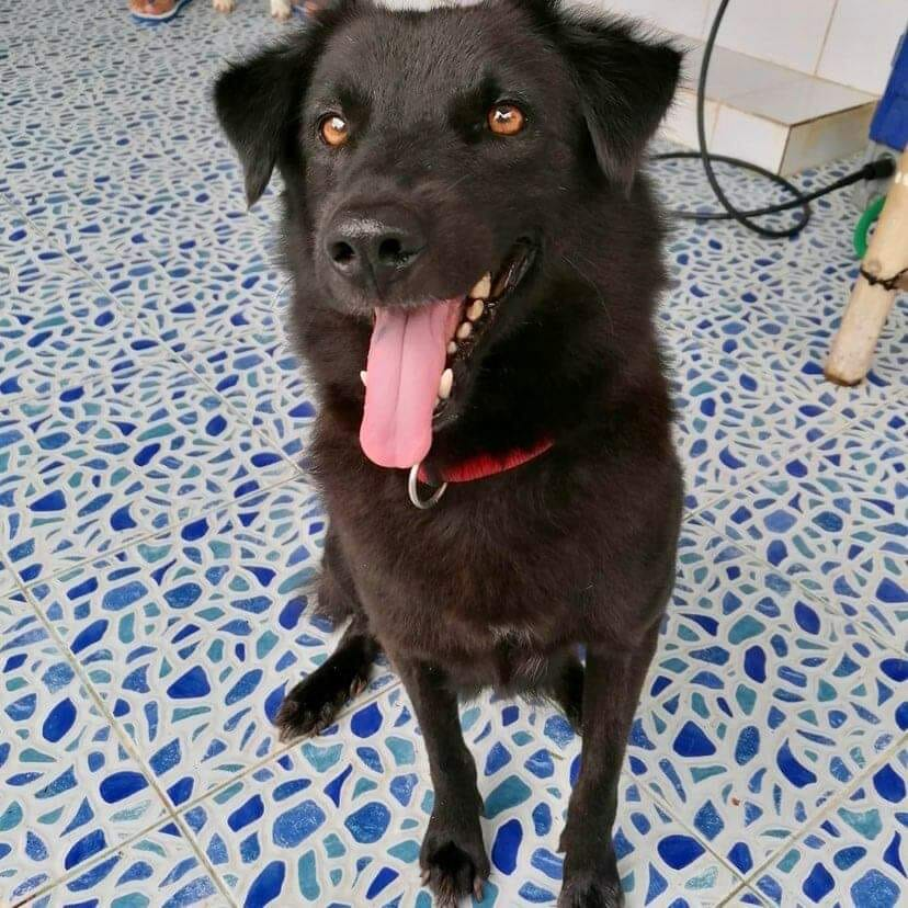 6BCE3F7D 3129 4D29 9793 0CF0C458B09B | Happy Dogs Koh Chang- animal welfare and shelter care Thailand