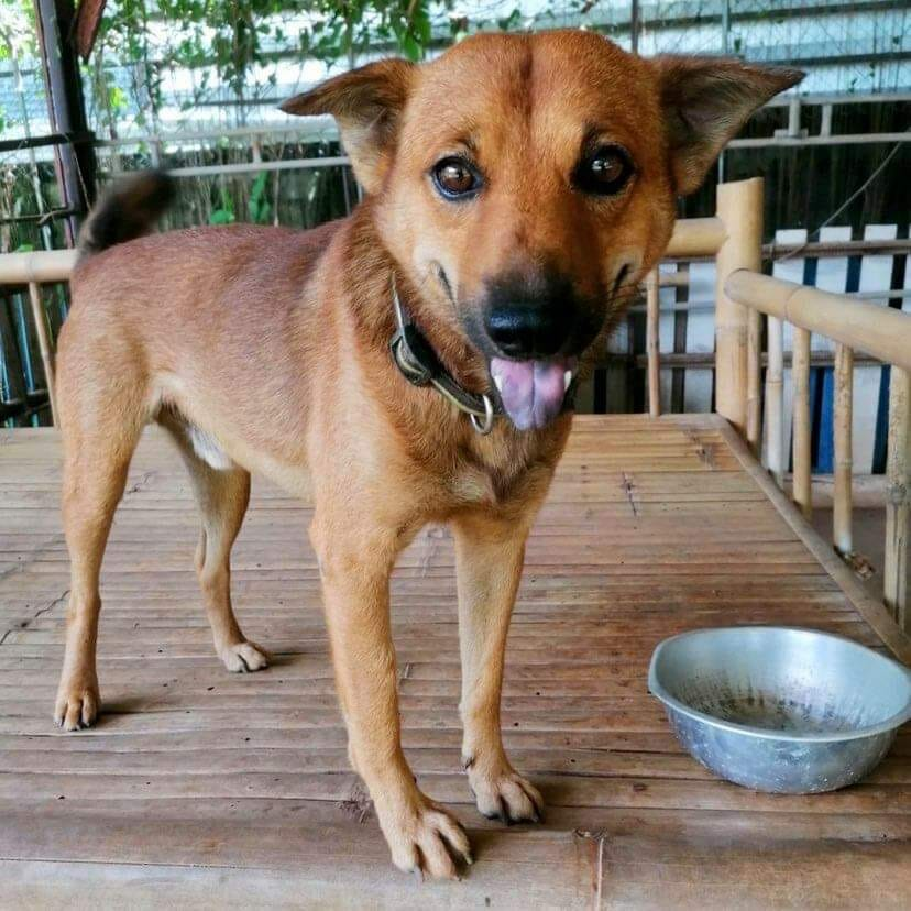 7F5404C5 FA66 41A1 94EB 4BC4253221A4 | Happy Dogs Koh Chang- animal welfare and shelter care Thailand