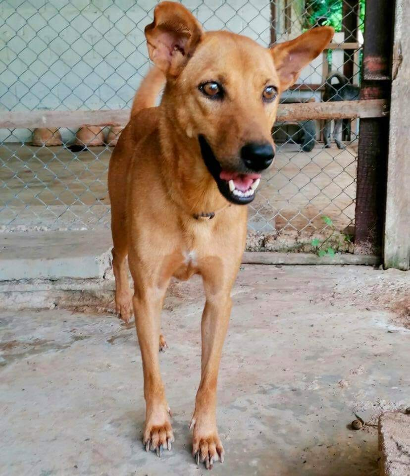 86CDF906 F21D 4067 B080 6D23B12025BB | Happy Dogs Koh Chang- animal welfare and shelter care Thailand