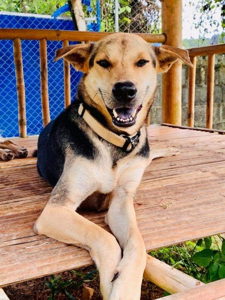 ABEEEF7F E9C2 41DE B802 9E20EA956FFE | Happy Dogs Koh Chang- animal welfare and shelter care Thailand