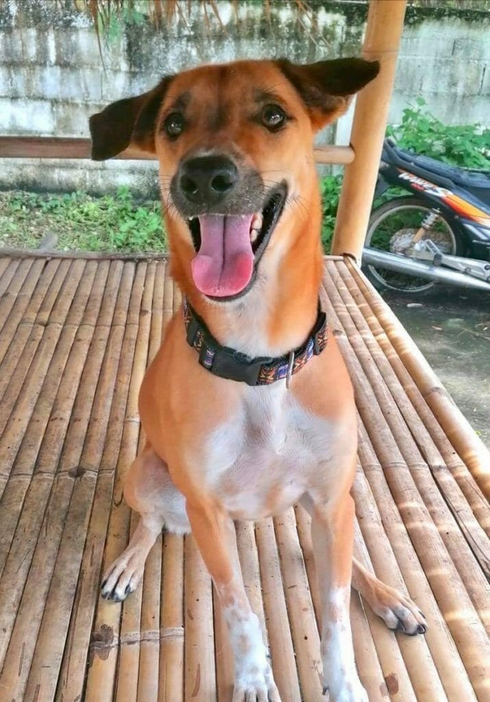 Attachment 1591976965 | Happy Dogs Koh Chang- animal welfare and shelter care Thailand
