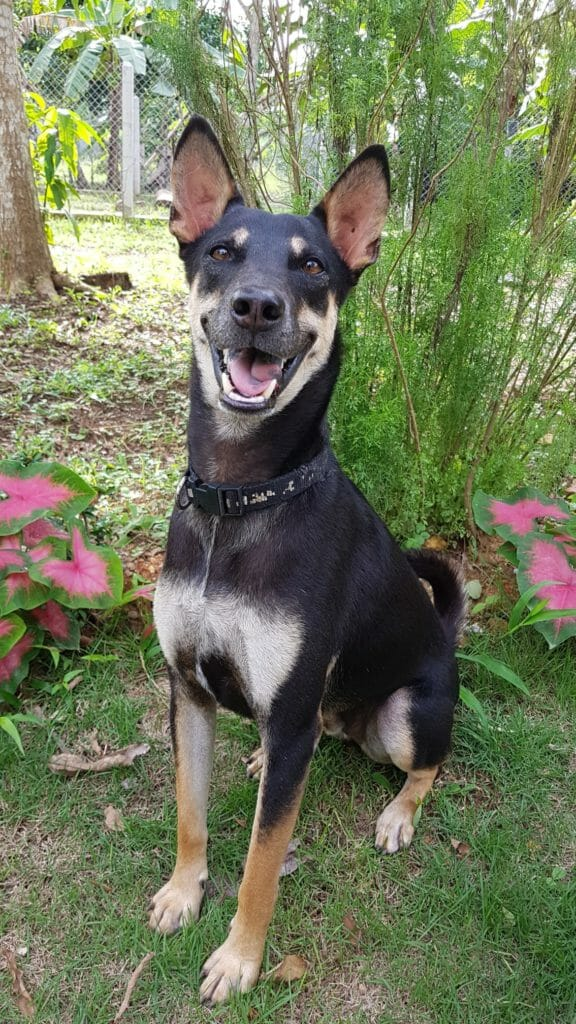 D9397C94 E9B0 4864 9BAD D094970417C2 | Happy Dogs Koh Chang- animal welfare and shelter care Thailand