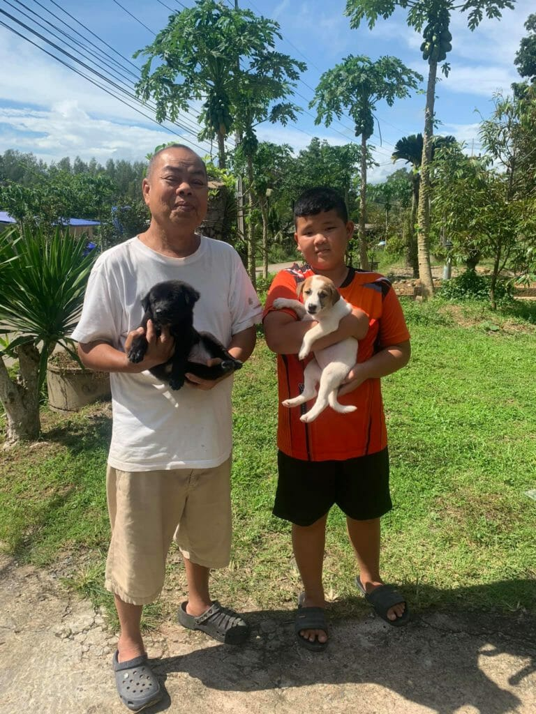 Oliang and Tinywhite adopted | Happy Dogs Koh Chang- animal welfare and shelter care Thailand