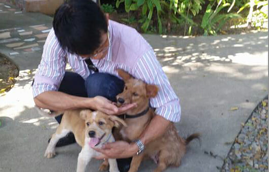 Pico and Deedee Easter Thailand | Happy Dogs Koh Chang- animal welfare and shelter care Thailand