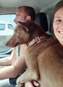 Ginger Success stories | Happy Dogs Koh Chang- animal welfare and shelter care Thailand