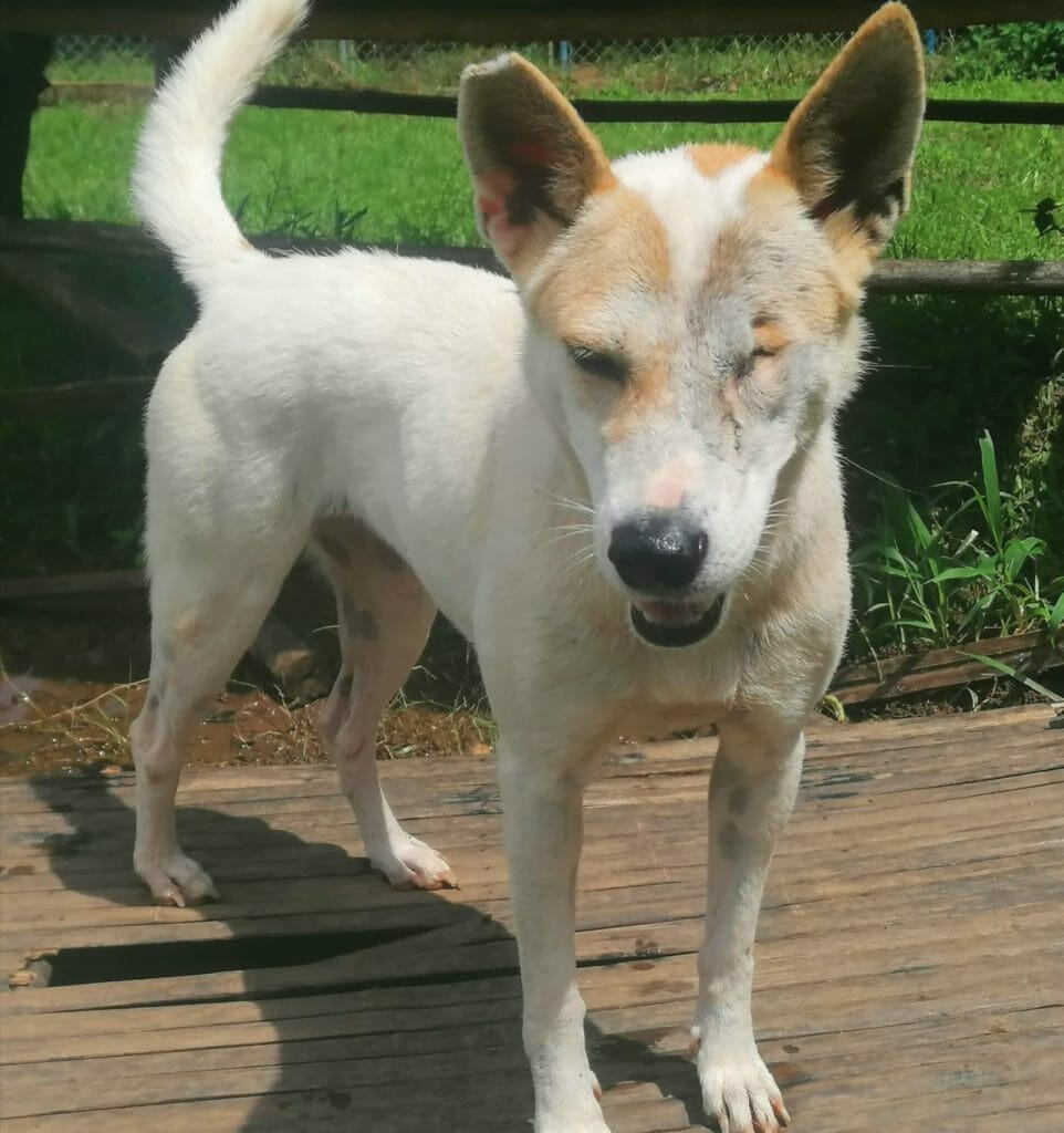 Joli 2 | Happy Dogs Koh Chang- animal welfare and shelter care Thailand