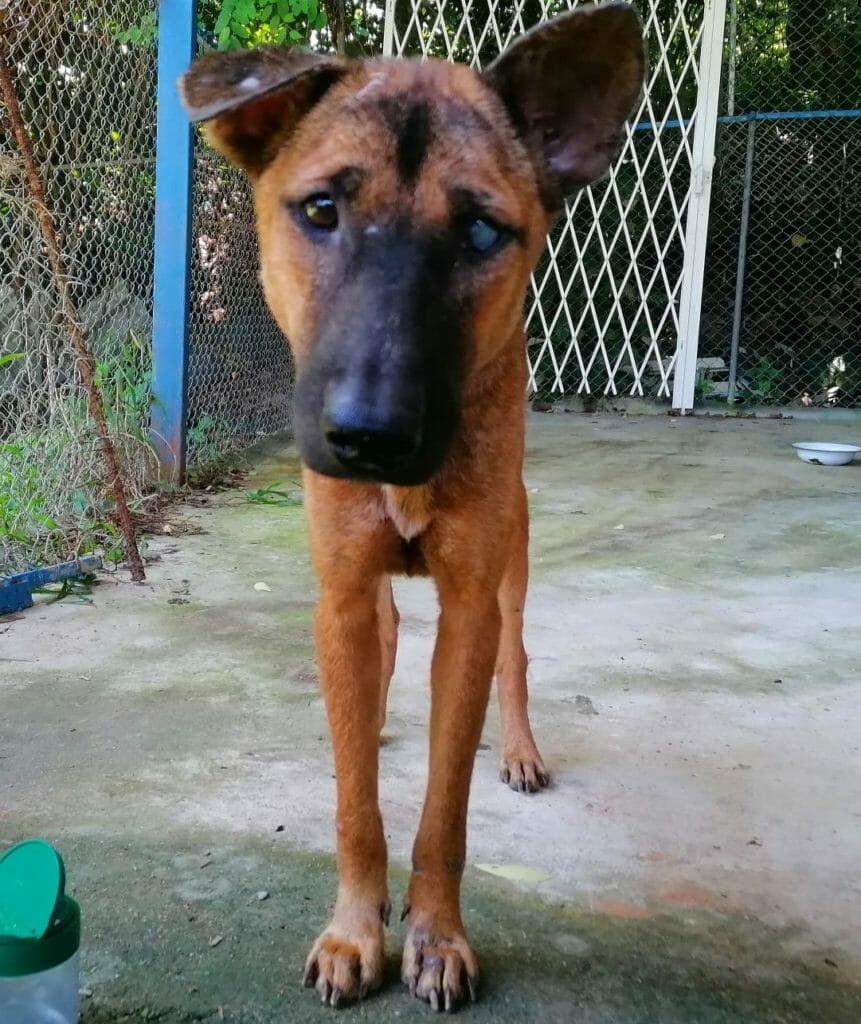 Lucky 2 | Happy Dogs Koh Chang- animal welfare and shelter care Thailand