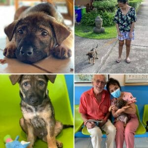 Attachment 1602227332 | Happy Dogs Koh Chang- animal welfare and shelter care Thailand