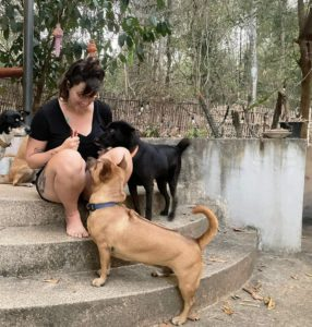 Attachment 1614250920 | Happy Dogs Koh Chang- animal welfare and shelter care Thailand