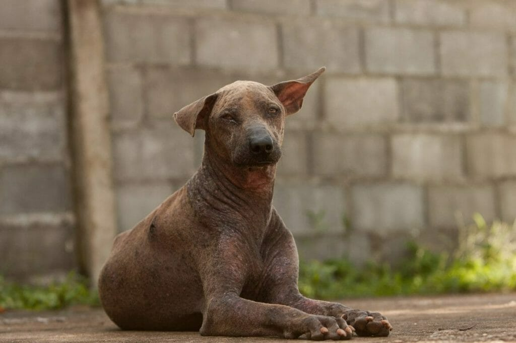 Hope 2016 1910 1160x771 1160x771 e1594738453437 | Happy Dogs Koh Chang- animal welfare and shelter care Thailand