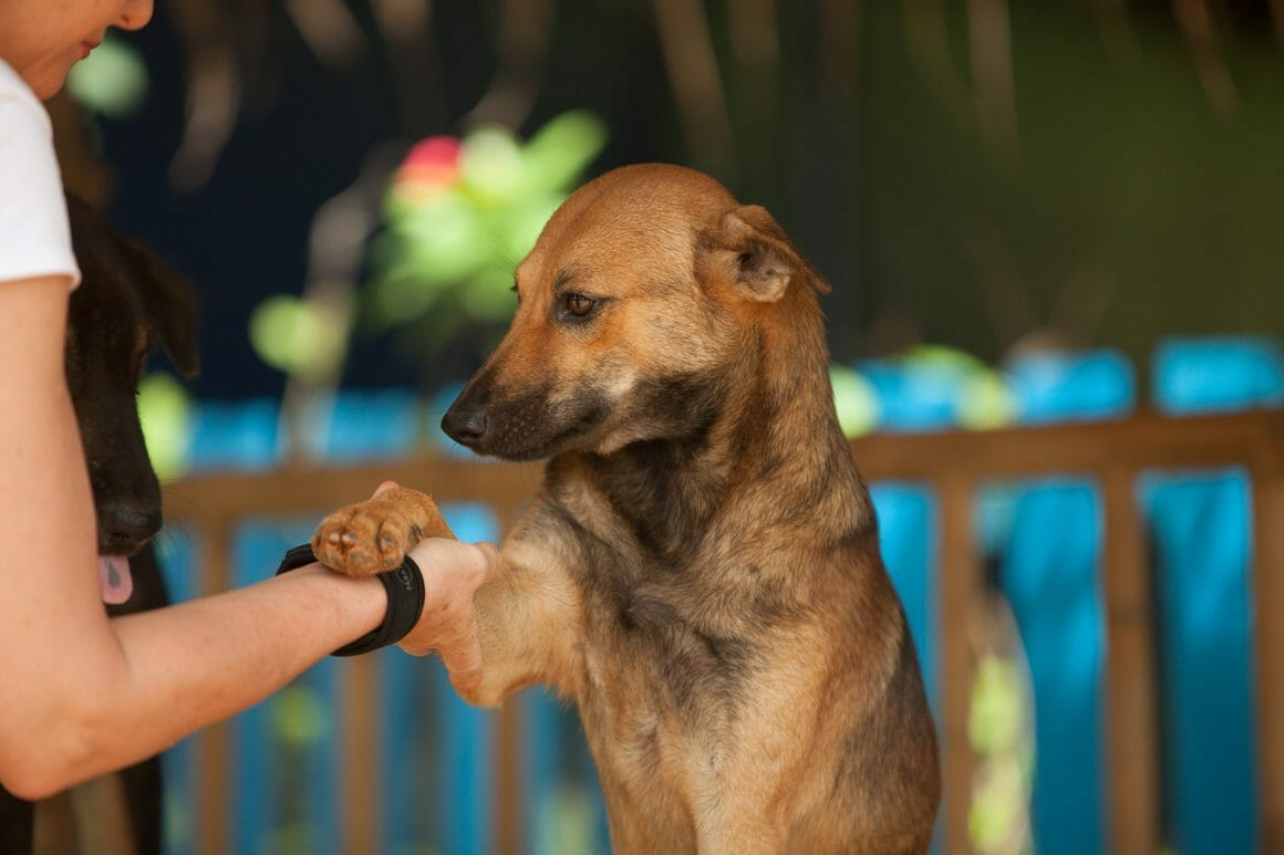 Namtan 1910 1160x773 | Happy Dogs Koh Chang- animal welfare and shelter care Thailand